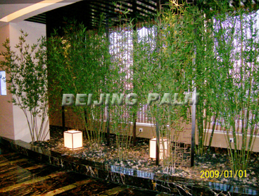 High Level Bamboo Tree(4m)