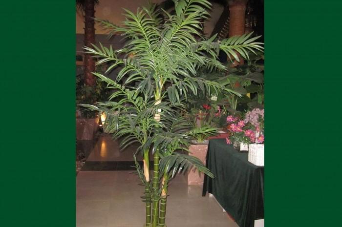 Artificial hawaii chrysailidocarpus