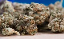 Vegas Weed