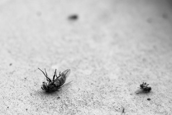 Pest Control Dubai Cockroach