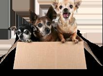 Pet Transport Melbourne | Animal Carriers, Pet Cargo & Movers