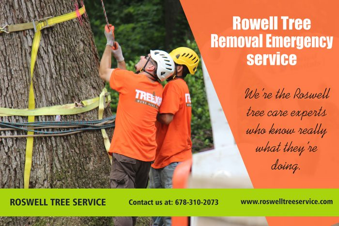Roswell Tree Service, Roswell Tree Removal, Tree Removal In Roswell, Tree Removal Roswell, Roswe ...
