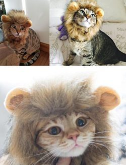 cat lion mane wig factory