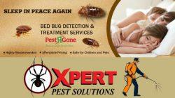 Cockroach Control Services Toronto