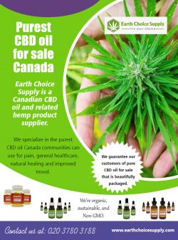 Purest CBD Oil for Sale Canada