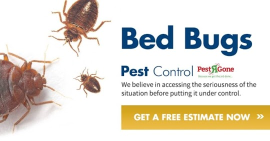 Cockroach Control Toronto – Pest R Gone