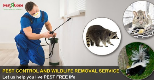 Mice Free Pest Control Richmond Hill