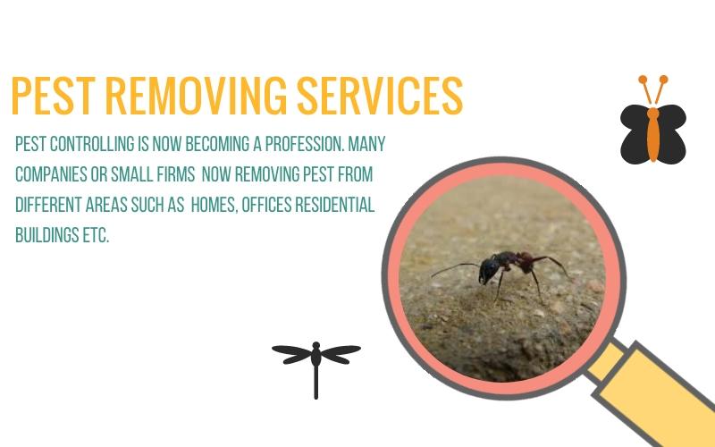 Pest Removing Service