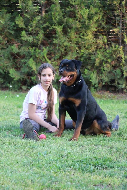 Trained Rottweiler for Sale
