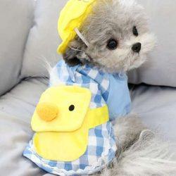 犬の服 服装セット ハット付き
