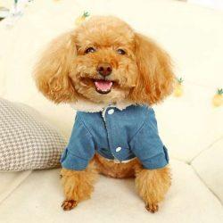 ワンちゃん服 ドッグウェア 犬の服