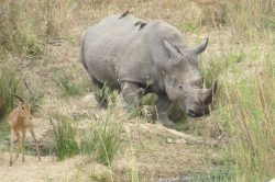 Ziwa Rhino Tracking with Devine African Safaris