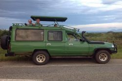 Game drives with Devine African Safaris