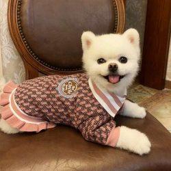 犬服 ワンちゃん服 ドッグウェア