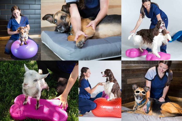 WalkingPawsRehab – Animal Rehabilitation