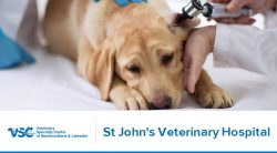 VSCNL – St John's Veterinary Hospital