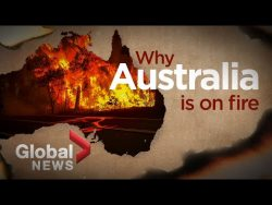 Bushfires in Australia: What ignited the deadly crisis – YouTube