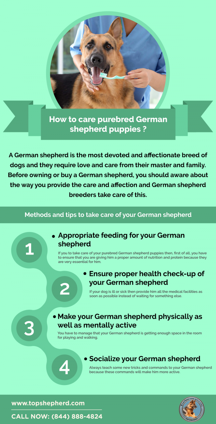 How to care purebred German shepherd puppies ?
