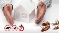 Find the most effective pest control services at Housejoy
