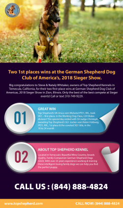 Two 1st places wins at the German Shepherd Dog Club of America's, 2018 Sieger Show