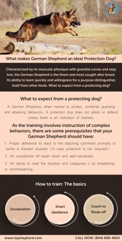 What makes German Shepherd an ideal Protection Dog?