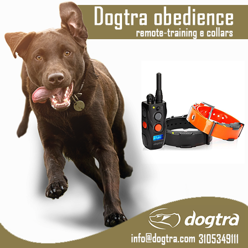 Dogtra obedience remote-training e collars