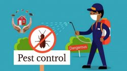 Pest Control Services British Columbia Canada Methods – Most Common