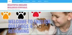 English bulldog puppies USA