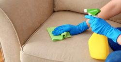 Eco-Conscious Sofa Cleaning Services