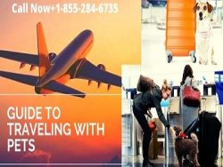 Airlines That Allow Pets In-Cabin When You Fly Call Now+1-855-284-6735
