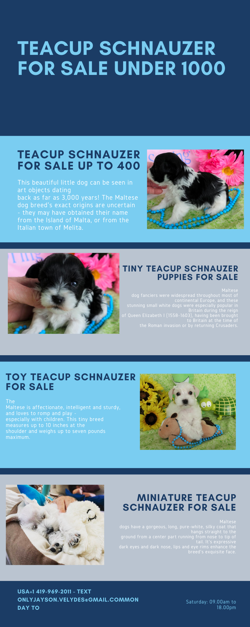 Baby face Schnauzer puppies for sale
