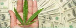 Cannabis investment latam