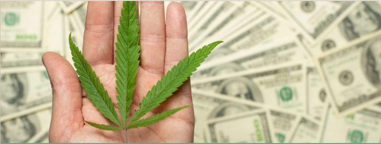 Cannabis investment latam