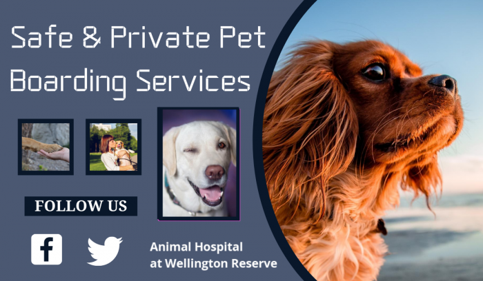 Affordable Care for your Pets