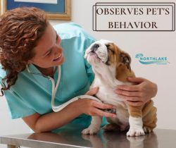 Performing a Physical Exam in Veterinary Care