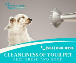The Leading Dog Grooming Service