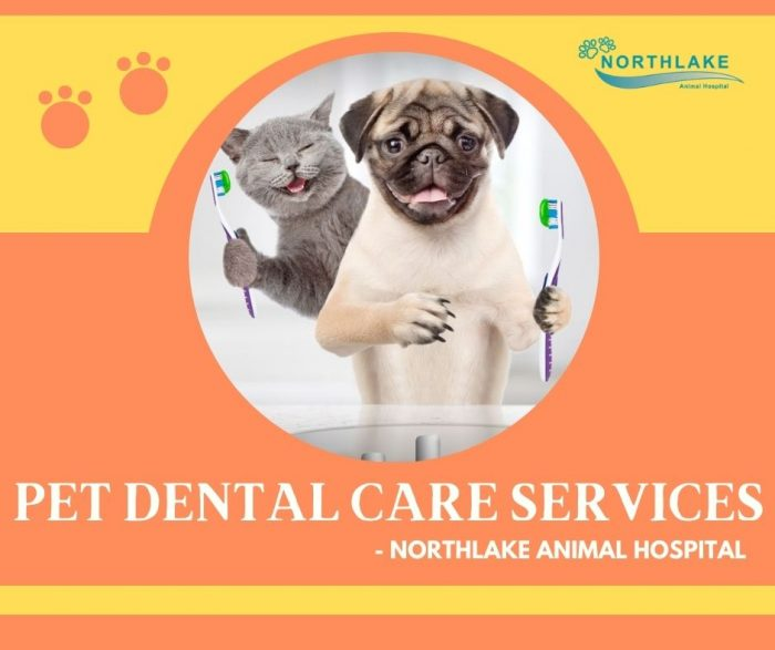 A Healthy Pet Starts with a Healthy Mouth