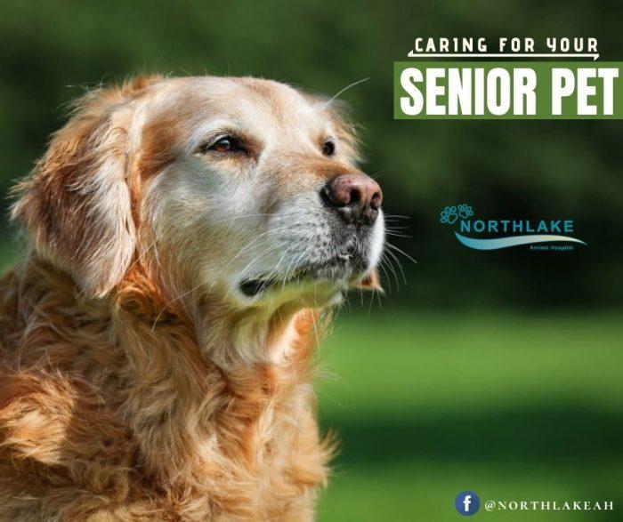 Personalized Senior Pet Care