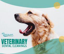 Advanced Veterinary Dentistry Service