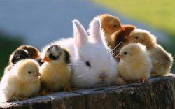 Help & Care For Animals – Harrise Yaron