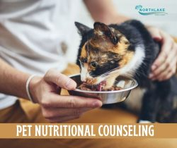 Health Diet for Healthy Pets