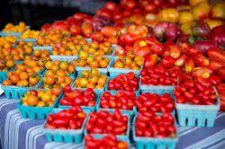 Worldwide Tomato Grover – John Deschauer