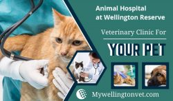 Caring for Your Pet