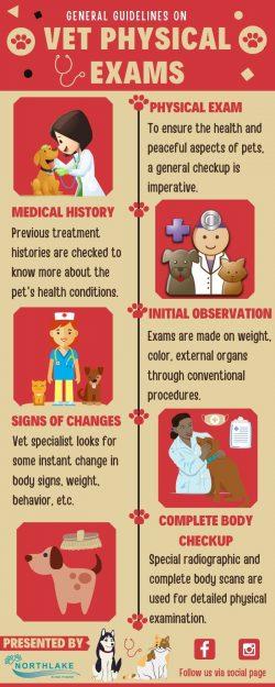 Importance of Pet Wellness Exams
