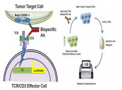 CD3xCD20 bsAb – Protheragen
