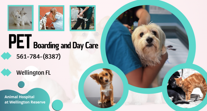 Choosing the Right Vet for Your Pet