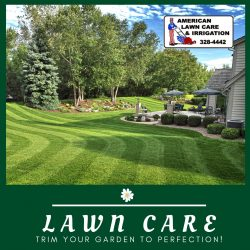 Keeping your Lawn Perfect and Healthy