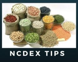 Get the Help or Advice About NCDEX Tips