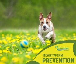 Best Treatment for Dog Heartworms