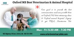 Oxford MS Veterinarian | Pet's Clinic
